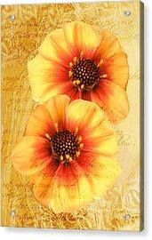 Acrylic Print featuring the photograph Dahlias by Helene U Taylor