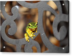 Dainty Tree Frog Acrylic Print