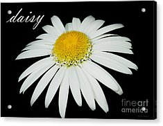 Daisy Acrylic Print by MaryJane Armstrong