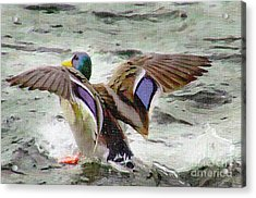 Dancing Bird Acrylic Print by Sylvia  Niklasson