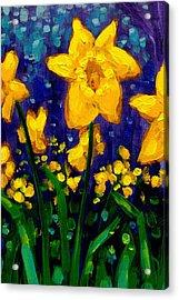 Dancing Daffodils Cropped  Acrylic Print