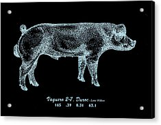 Acrylic Print featuring the drawing Danish Duroc by Larry Campbell