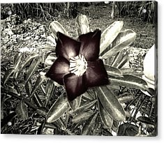 Dark Acrylic Print by Chasity Johnson