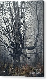 Dark Forest Acrylic Print by HD Connelly