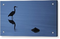 Dark Heron Acrylic Print by Timothy Hack