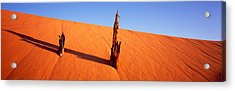 Dead Pine Tree At Coral Pink Sand Dunes Acrylic Print by Panoramic Images