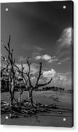 Dead Trees On The Beach Acrylic Print