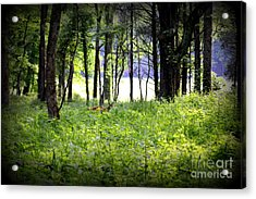 The Deer In A Secret Glade Cades Cove Acrylic Print