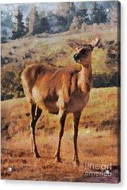 Deer On Mountain  Acrylic Print by Pixel Chimp