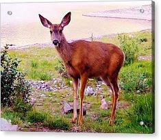 Deer Visit Acrylic Print by Cathy Long