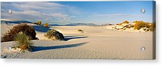 Desert Plants In A Desert, White Sands Acrylic Print by Panoramic Images
