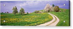 Dirt Road Through Meadow Of Dandelions Acrylic Print