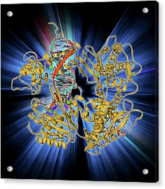 Dna Clamp Complexed With Dna Molecule Acrylic Print by Laguna Design