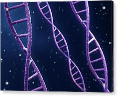 Dna Strands Acrylic Print by Maurizio De Angelis/science Photo Library