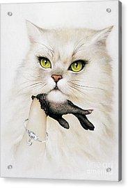 Domestic Cat, Conceptual Image Acrylic Print
