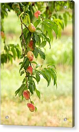Donut Peaches Acrylic Print by Iris Richardson