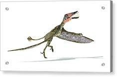 Dorygnathus Dinosaur Acrylic Print