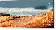 Drift Wood Acrylic Print by Henrik Lehnerer