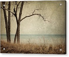 Drifting Acrylic Print by Amy Weiss