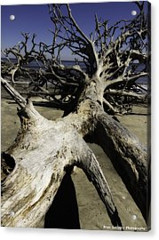 Driftwood Acrylic Print by Fran Gallogly