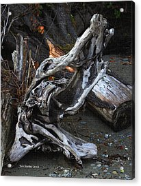 Driftwood On The Beach Acrylic Print by Tom Janca