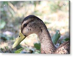 Duck - Animal - 011314 Acrylic Print