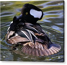 Duck Acrylic Print by Paulette Thomas