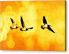 Ducks Flying Acrylic Print