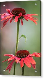 Duo Acrylic Print by Jacqui Boonstra