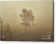 Early Morning Canaan Valley Acrylic Print by Dan Friend
