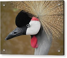 East African Crowned Crane Acrylic Print