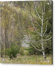 Easton Mountain Trees And Pond Acrylic Print by John Arnaldi