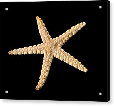 Elegant Starfish Acrylic Print by Natural History Museum, London
