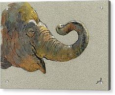 Elephant Head Acrylic Print by Juan  Bosco