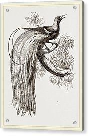 Emerald Bird Of Paradise Acrylic Print by Litz Collection