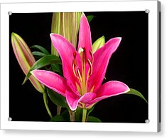 Erotic Pink Purple Flower Selection Romantic Lovely Valentine's Day Print Acrylic Print by Navin Joshi