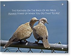 Eurasian Collared Dove Acrylic Print
