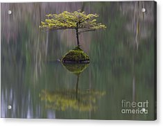 Fairy Lake Fir Acrylic Print