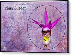 Fairy Slipper Acrylic Print