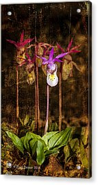 Fairy Slippers Acrylic Print
