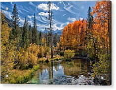 Fall At Bishop Creek Acrylic Print by Cat Connor