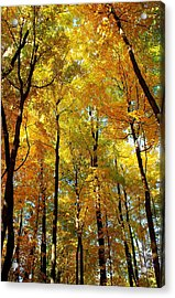Fall Acrylic Print by F Salem