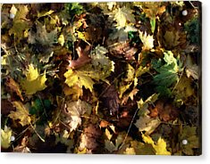 Fallen Leaves Acrylic Print