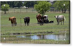 Family Gathering Acrylic Print by Ruth  Housley