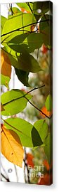 Famous Fall 9 Acrylic Print by France Laliberte