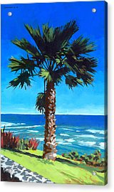 Fan Palm - Diamond Head Acrylic Print