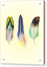 Feathers Acrylic Print by Mark Ashkenazi