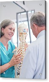 Female Chiropractor Showing Anatomical Model Acrylic Print by Science Photo Library