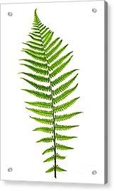 Fern Leaf Acrylic Print