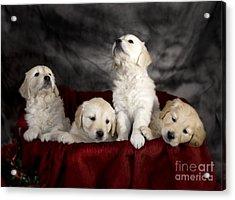 Festive Puppies Acrylic Print by Angel  Tarantella